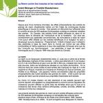 Neem contre insectes et maladies